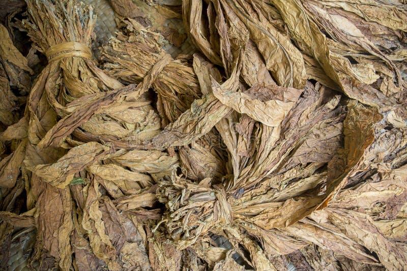 一束干烟草在达卡, manikganj,孟加拉国 库存照片