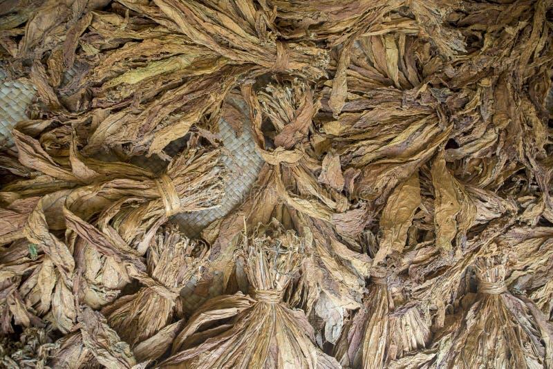 一束干烟草在达卡, manikganj,孟加拉国 库存图片