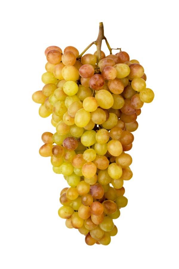 一束成熟葡萄在白色背景,特写镜头雕刻了 免版税库存照片