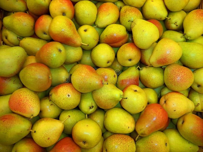 一束新的庄稼的新鲜的成熟梨 库存图片