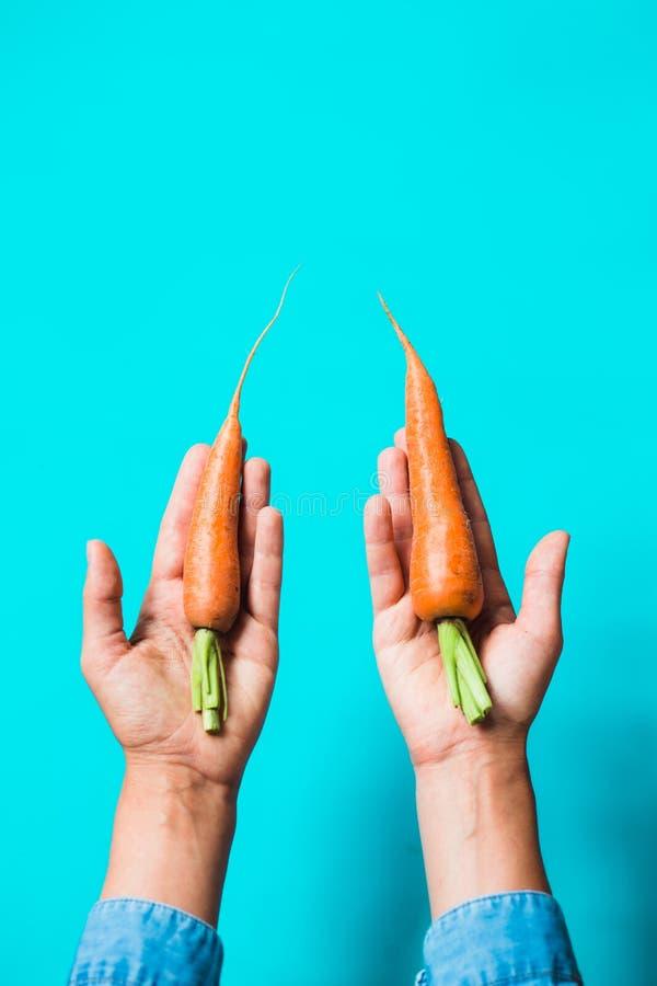 一束新鲜的红萝卜在手中在蓝色背景 库存图片