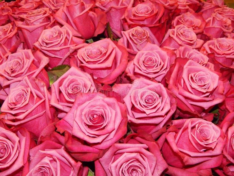 一束玫瑰作为花背景 库存图片