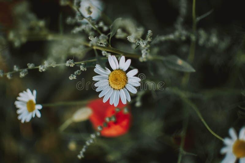 一束白花的近射有被弄脏的背景 免版税库存照片