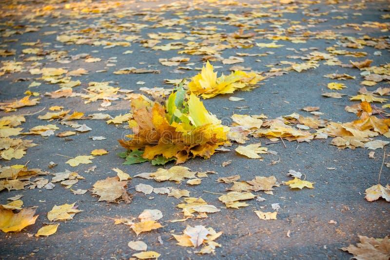 一束秋叶清扫了擦净剂对柏油路的边缘对遏制,一个愚钝,雨天 五颜六色的秋天 免版税库存照片