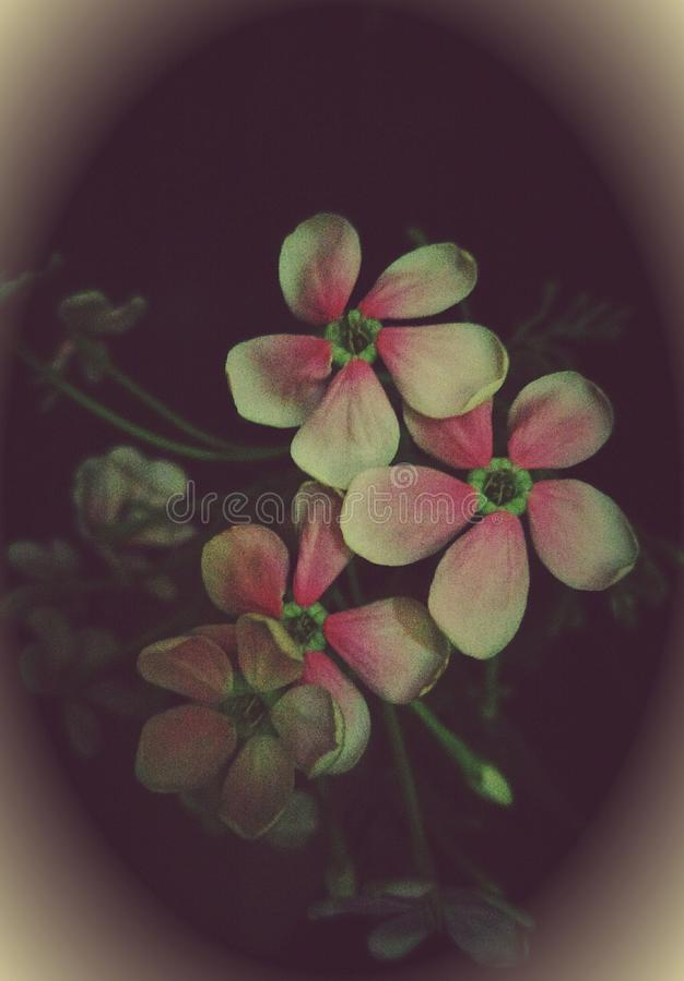 一束美好的花与一种艺术性的接触的 免版税库存图片