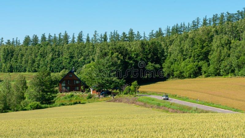 一条全景乡下公路在Biei通过一个金黄米农场和 免版税库存图片