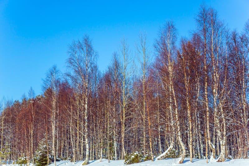 一条冻河的岸的森林 库存图片