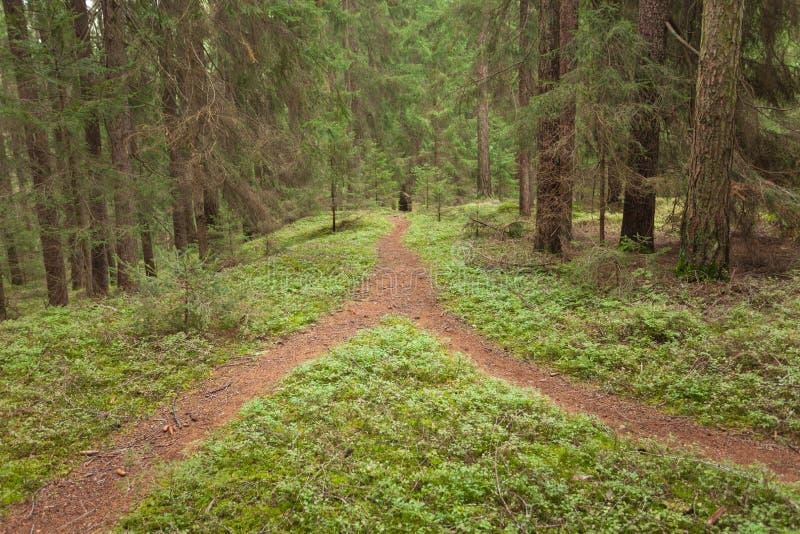 一条唯一山道路在两个不同方向分裂 它是一秋季多云天 一条唯一山道路在两diffe分裂 免版税库存照片