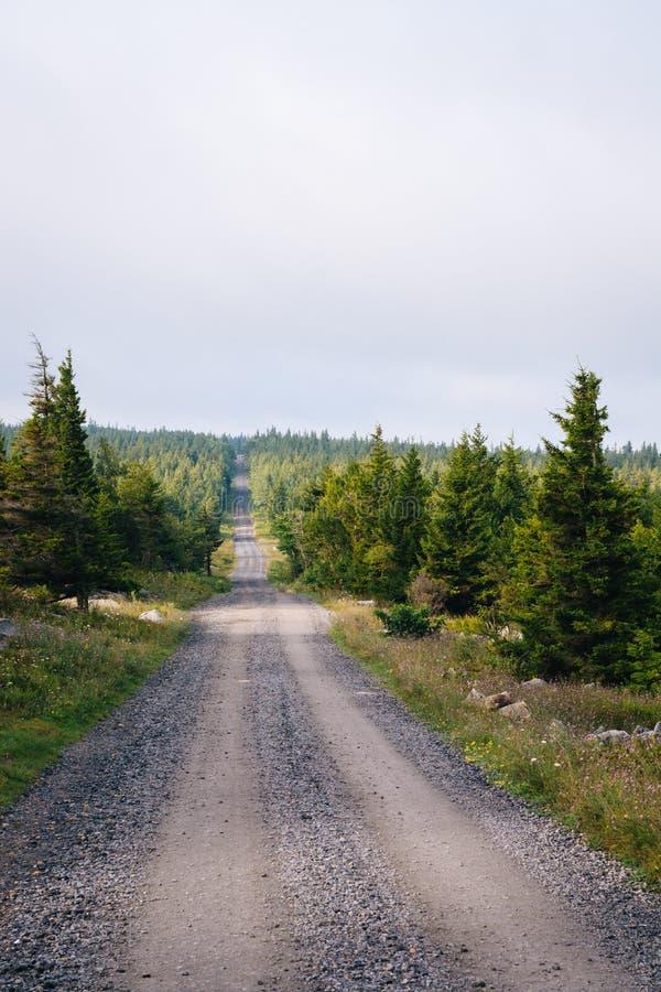 一条土路和松树在移动式摄影车草皮原野,Monongahela国家森林,西维吉尼亚 图库摄影