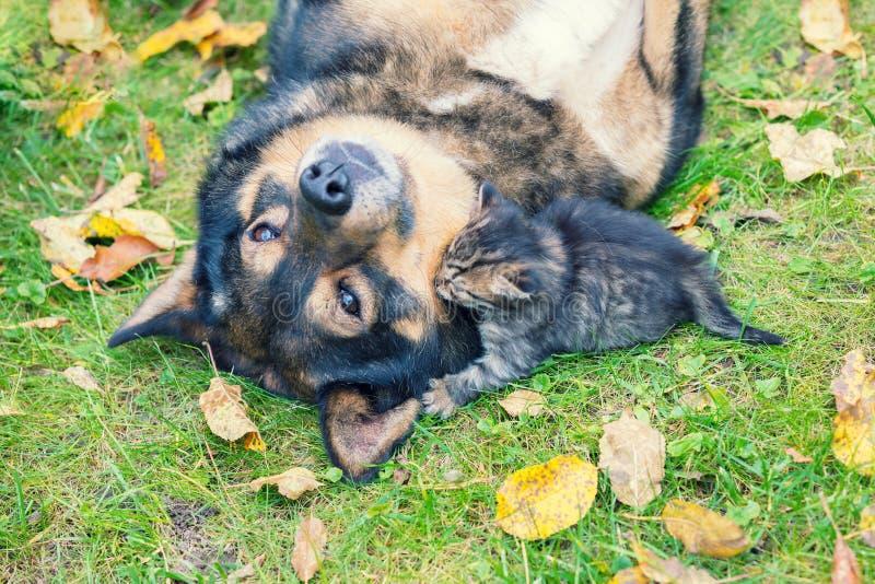 一条大狗和一只小的小猫是最好的朋友 免版税库存照片