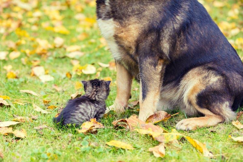 一条大的狗和一起使用一只小的小猫户外 他们在秋天紧挨着坐草 免版税库存照片