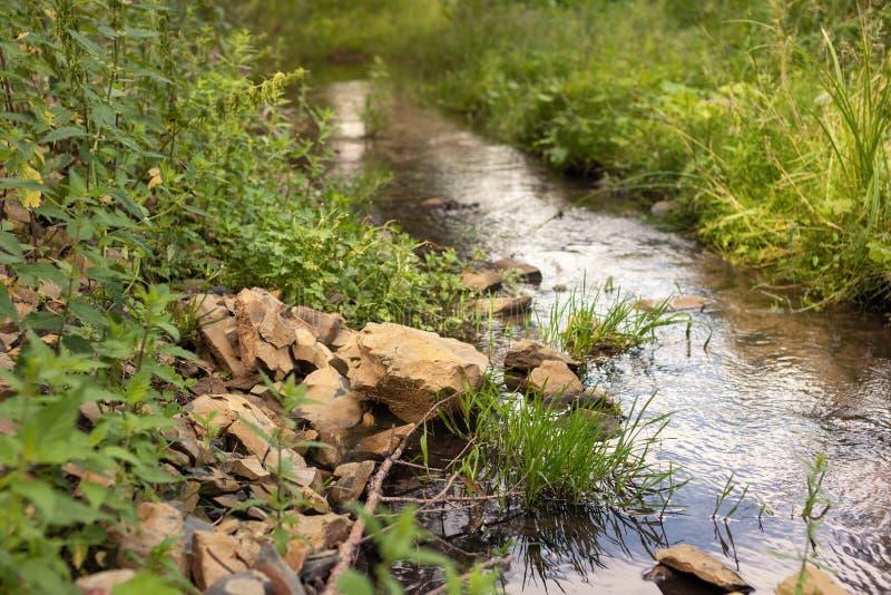 一条小小河在森林里 免版税图库摄影