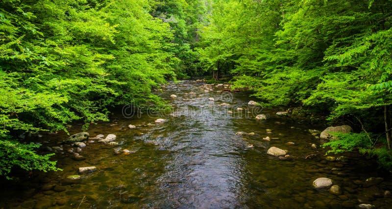 一条小小河,在大烟山国家公园, Tennesse 免版税库存图片