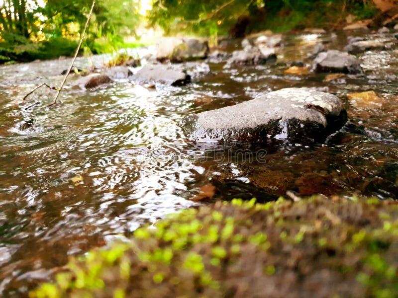 一条小死的河! 库存图片