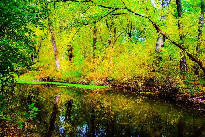 一条小河在秋天森林里 库存图片