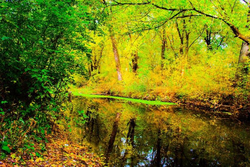 一条小河在秋天森林里 库存照片