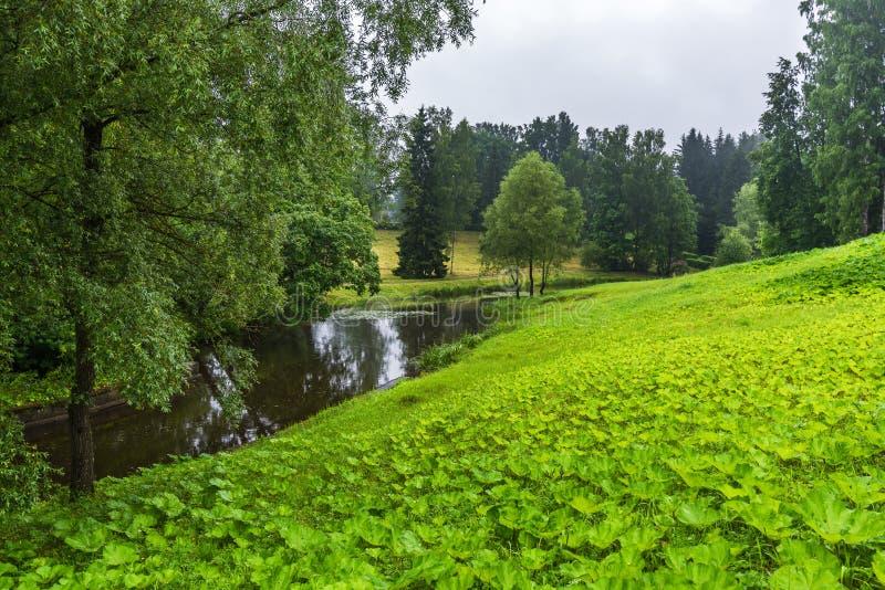 一条小河在草甸和树丛中流动 图库摄影