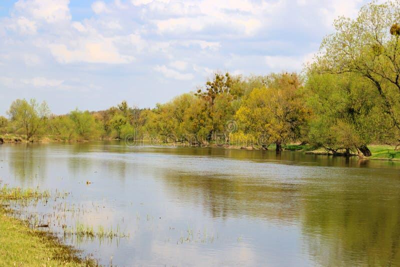 一条小河的岸有豪华的树的在反对蓝天的一个春日 自然的横向 免版税库存照片