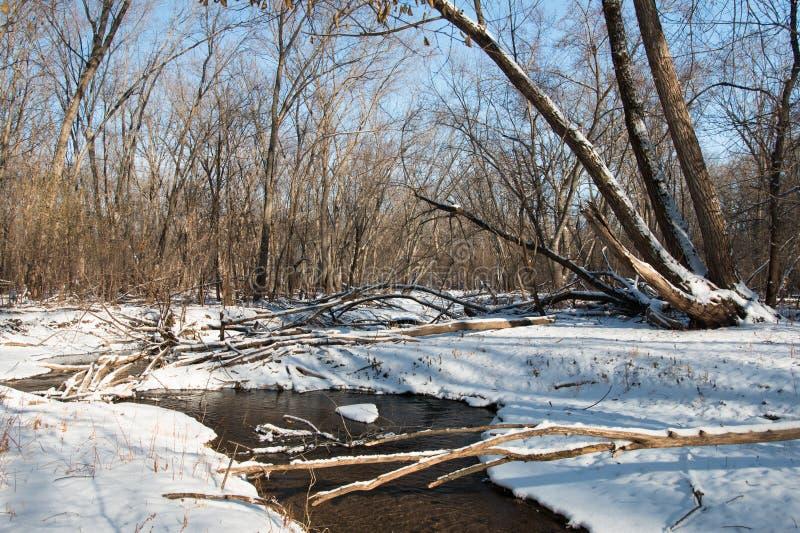 一条小河的弯在冬天森林里 免版税库存图片
