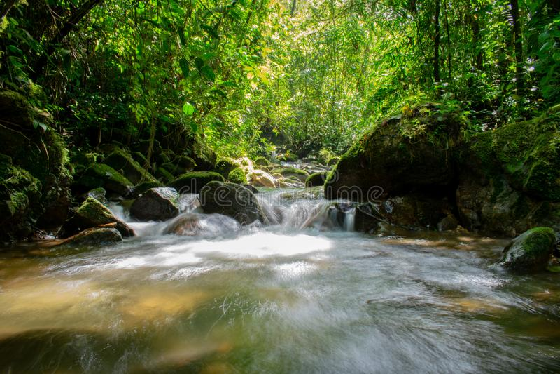 一条小河的视域在热带森林的 图库摄影