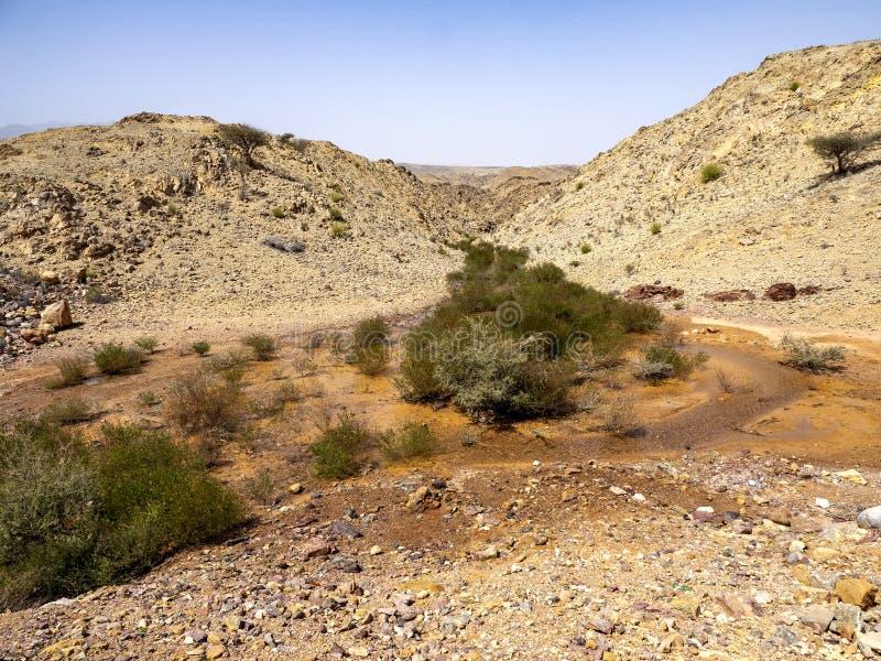 一条小溪沿着阿曼石质沙漠的斜坡流动 阿曼 库存照片