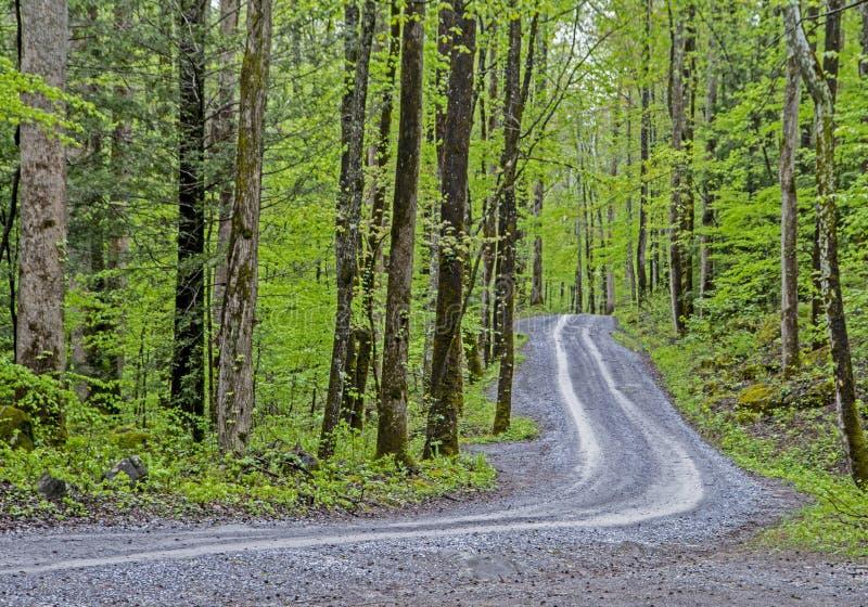 一条小石渣路通过在Smokies的绿叶运行 免版税库存图片
