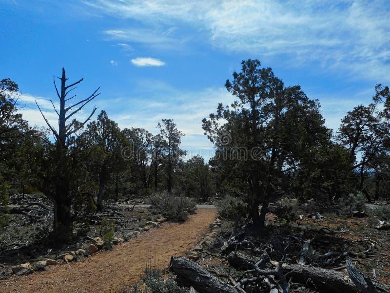 一条小道路在亚利桑那国立公园 库存照片