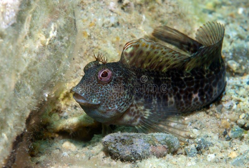 一条小鱼在岩石出来 库存图片