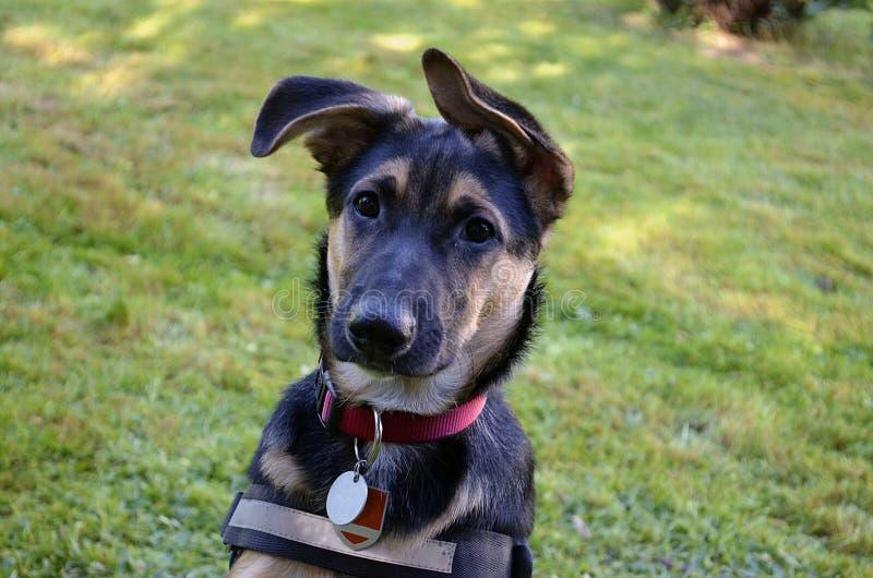 一条幼小狗的纵向 免版税库存照片