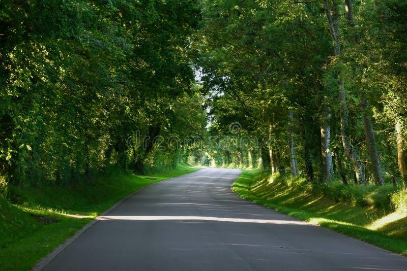 一条弯曲的柏油路通过一个绿色森林 免版税图库摄影