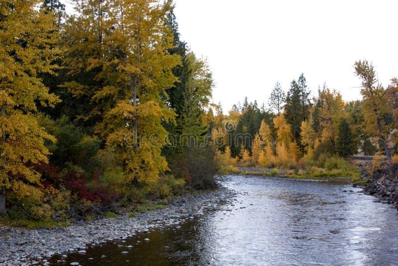 一条快行河在美丽的秋天树附近弯曲 免版税库存照片
