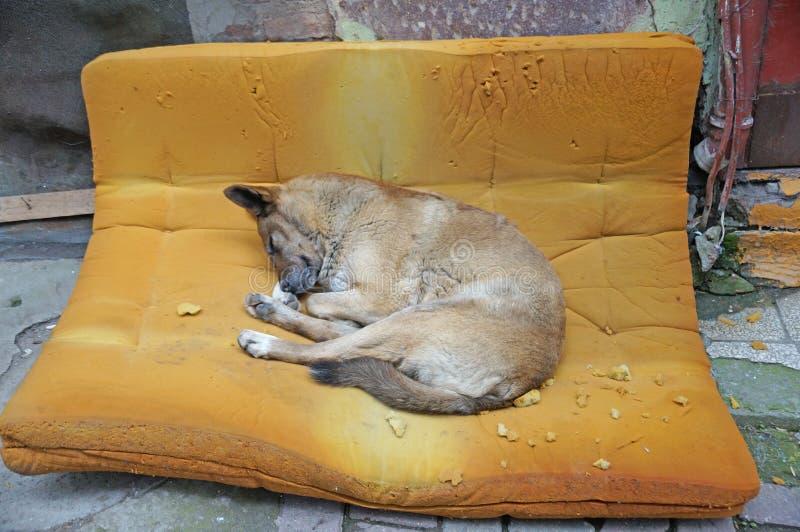 一条无家可归的狗睡眠 免版税库存照片