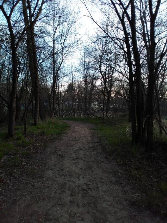 一条树木繁茂的道路 库存图片