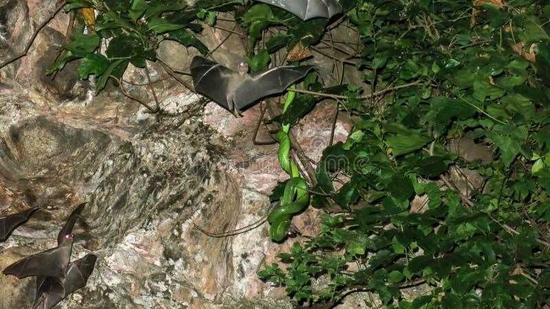 一条毒蛇吃一根棒 在热带植被抓住的蛇捕食 鸟的嘴唇发白坑蛇蝎狩猎 棒飞行 免版税库存照片