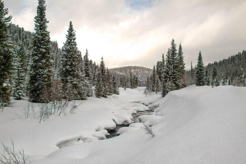 一条河在一个多雪的森林里 库存照片