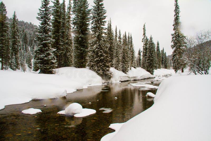 一条河在一个多雪的森林里 免版税图库摄影
