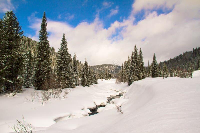 一条河在一个多雪的森林里 免版税库存图片