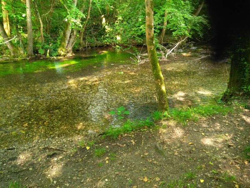 一条河在扭转的树森林里  免版税库存图片