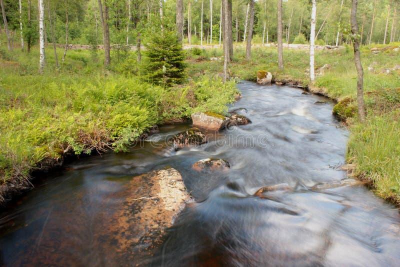 一条河在瑞典森林 免版税图库摄影