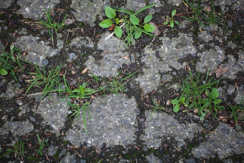 一条涂焦油路的植物 免版税库存照片