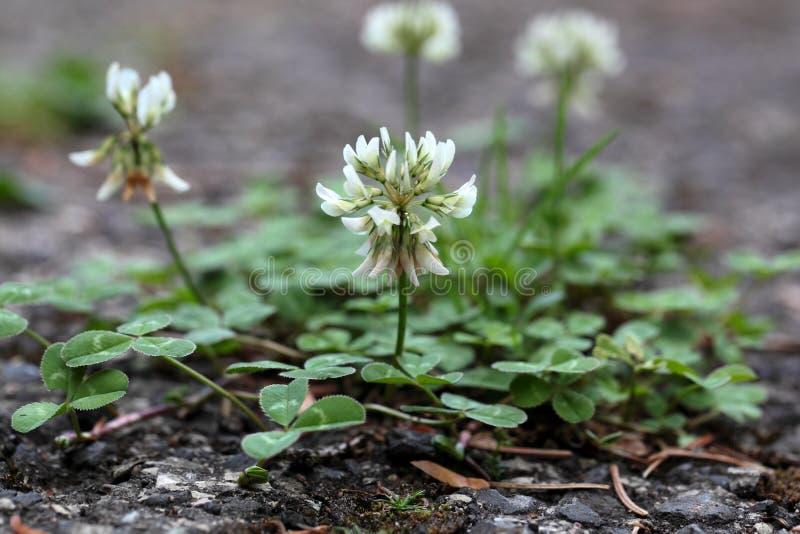 一条涂焦油路的植物 免版税库存图片