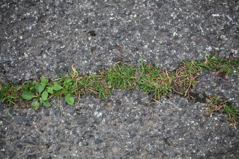 一条涂焦油路的植物 库存照片