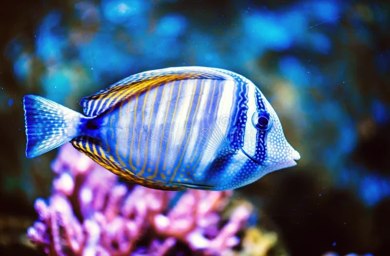 一条热带鱼的照片 免版税库存照片