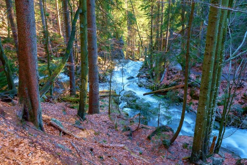 一条狂放的小河在巴法力亚森林里 免版税库存照片
