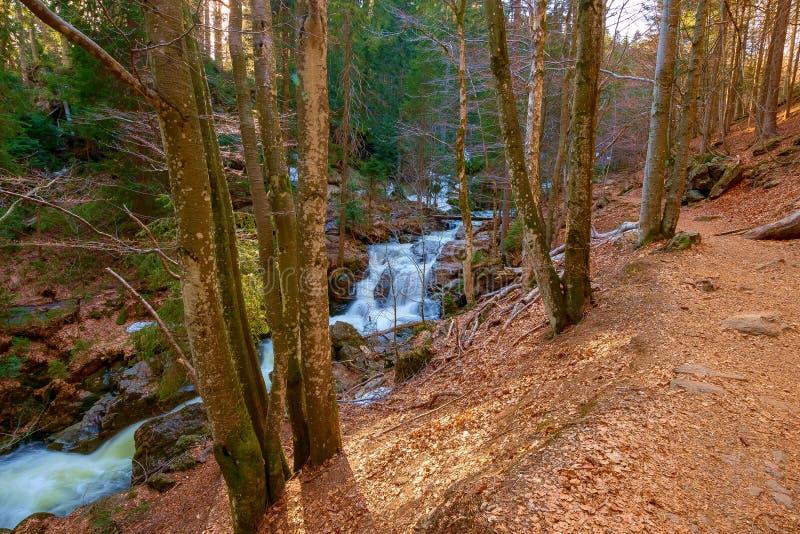 一条狂放的小河在巴法力亚森林里 免版税库存图片