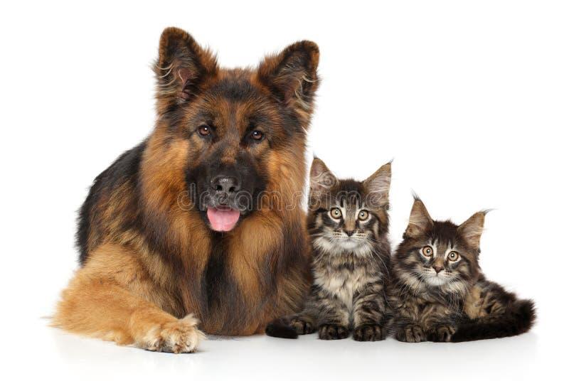 一条狗和小猫的画象在白色 库存照片