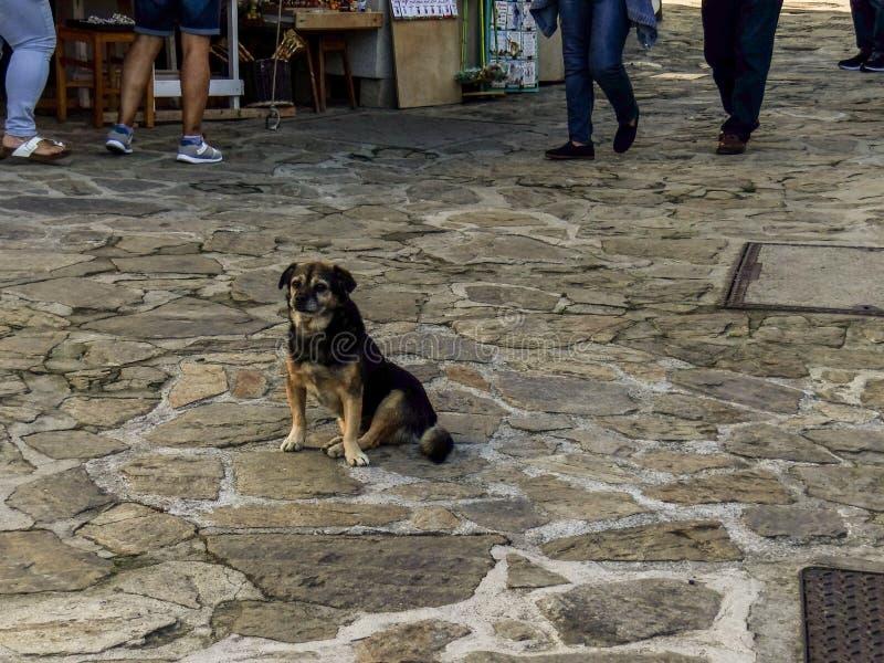 一条狗在圣Andrés 库存照片