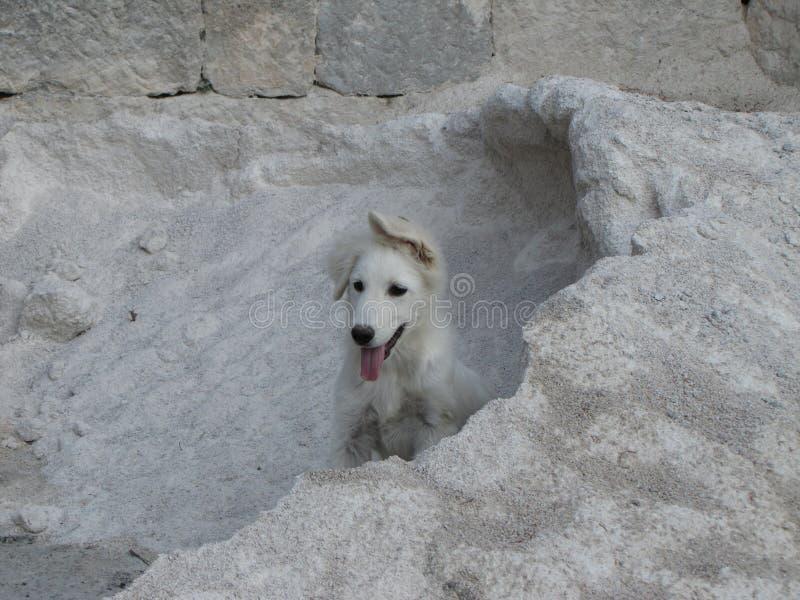 一条狗 免版税图库摄影