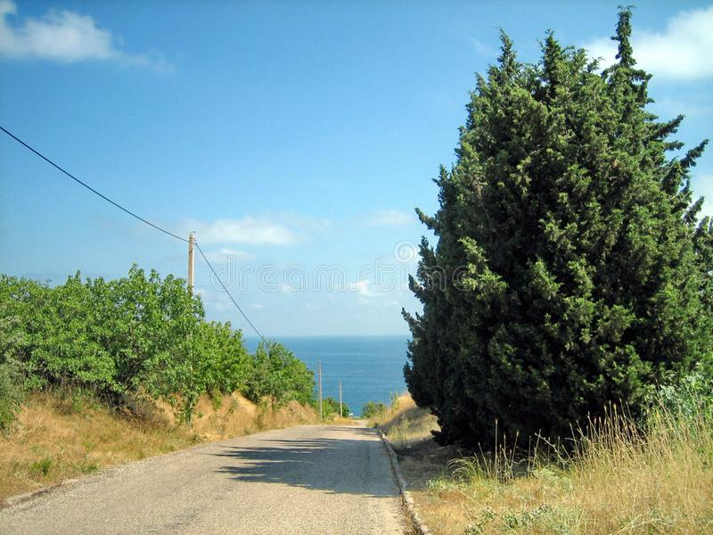 一条狭窄的柏油路在通过常青树和太阳被烧焦的草的一热的好日子 库存照片