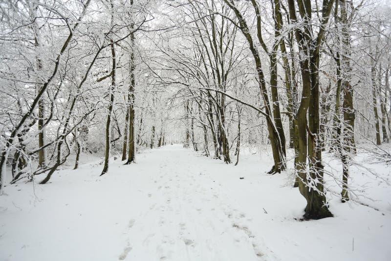 一条积雪的森林地道路在球木头, Hertford荒地,英国的一个冬日 免版税库存照片